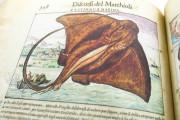Discorsi del Mattioli Illustrated by Gherardo Cibo, Rari 278 - Biblioteca Alessandrina (Rome, Italy) Biblioteca Alessandrina (Rome, Italy) − photo 11