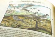 Discorsi del Mattioli Illustrated by Gherardo Cibo, Rari 278 - Biblioteca Alessandrina (Rome, Italy) Biblioteca Alessandrina (Rome, Italy) − photo 18