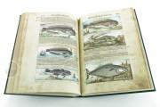 Discorsi del Mattioli Illustrated by Gherardo Cibo, Rari 278 - Biblioteca Alessandrina (Rome, Italy) Biblioteca Alessandrina (Rome, Italy) − photo 19