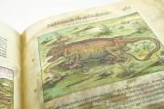 Discorsi del Mattioli Illustrated by Gherardo Cibo, Rari 278 - Biblioteca Alessandrina (Rome, Italy) Biblioteca Alessandrina (Rome, Italy) − photo 21