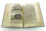 Discorsi del Mattioli Illustrated by Gherardo Cibo, Rari 278 - Biblioteca Alessandrina (Rome, Italy) Biblioteca Alessandrina (Rome, Italy) − photo 23