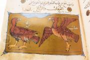 Libro de la Utilidad de los Animales, ms. árabe 898 - Real Biblioteca del Monasterio (San Lorenzo de El Escorial, Spain) − photo 4
