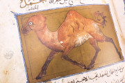 Libro de la Utilidad de los Animales, ms. árabe 898 - Real Biblioteca del Monasterio (San Lorenzo de El Escorial, Spain) − photo 7