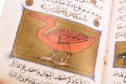 Libro de la Utilidad de los Animales, ms. árabe 898 - Real Biblioteca del Monasterio (San Lorenzo de El Escorial, Spain) − photo 13