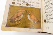 Libro de la Utilidad de los Animales, ms. árabe 898 - Real Biblioteca del Monasterio (San Lorenzo de El Escorial, Spain) − photo 15