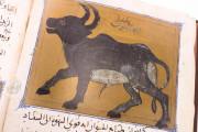Libro de la Utilidad de los Animales, ms. árabe 898 - Real Biblioteca del Monasterio (San Lorenzo de El Escorial, Spain) − photo 16