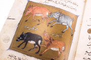 Libro de la Utilidad de los Animales, ms. árabe 898 - Real Biblioteca del Monasterio (San Lorenzo de El Escorial, Spain) − photo 18