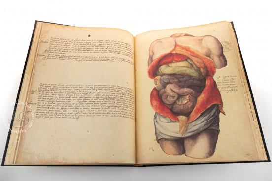 Anatomia Depicta, Florence, Biblioteca Nazionale Centrale − Photo 1