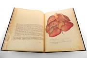 Anatomia Depicta, Florence, Biblioteca Nazionale Centrale − Photo 4