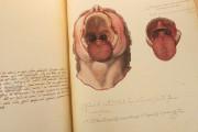 Anatomia Depicta, Florence, Biblioteca Nazionale Centrale − Photo 5