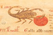 Liber Magistri, Piacenza, Archivio Capitolare della Cattedrale − Photo 7
