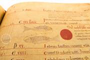 Liber Magistri, Piacenza, Archivio Capitolare della Cattedrale − Photo 15