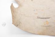 Carta Naútica de Mecia de Viladestes, Paris, Bibliothèque Nationale de France, CPL GE AA-566 (RES) − Photo 6