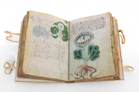 Voynich Manuscript, MS 408 - Beinecke Rare Book and Manuscript Library (New Haven, USA), Voynich Manuscript facsimile, opening on mysterious unidentified plant species