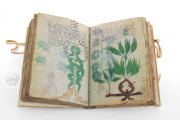 Voynich Manuscript, MS 408 - Beinecke Rare Book and Manuscript Library (New Haven, USA), An opening on the mysterious cipher written in an unknown script in the Voynich manuscript
