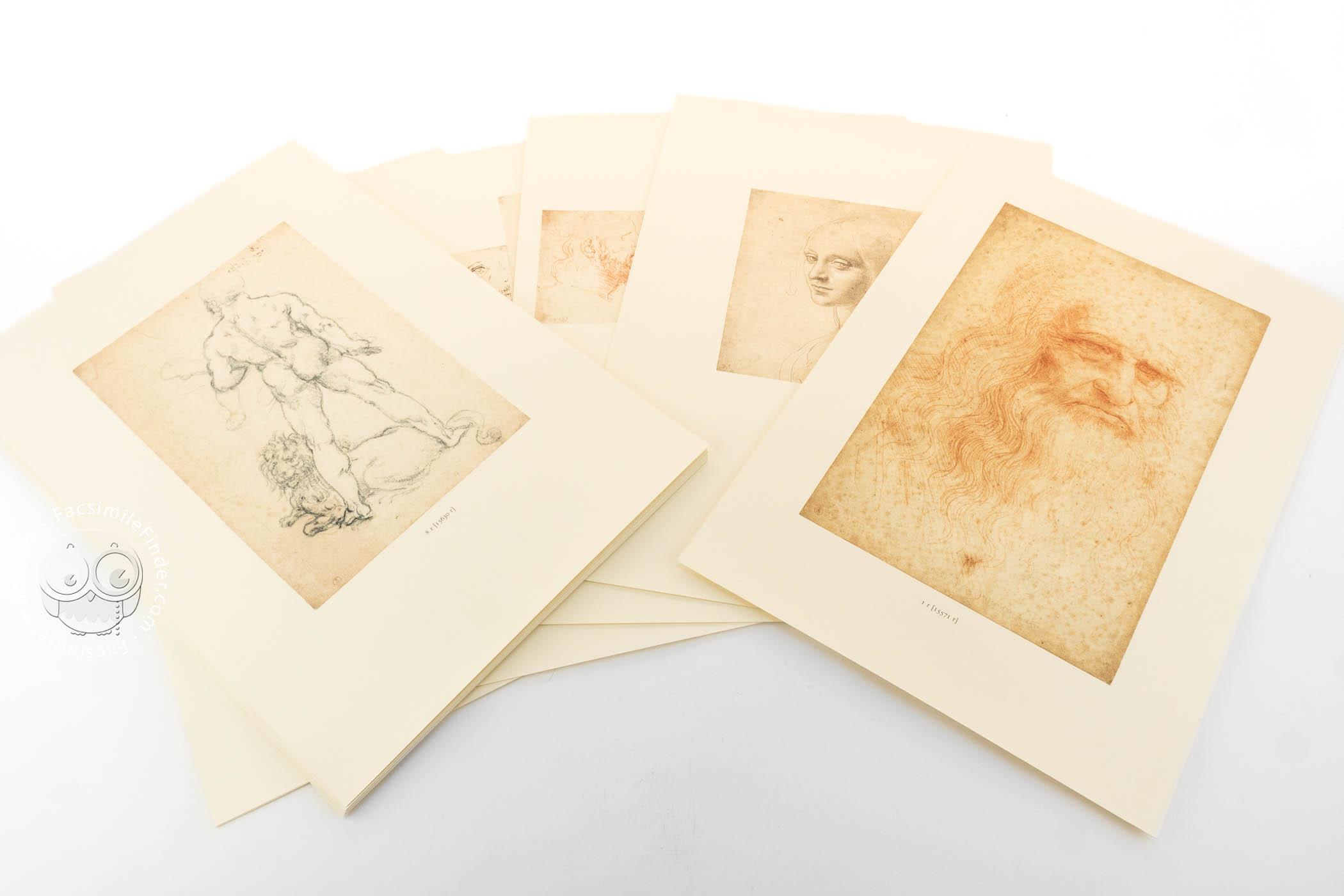 drawings of leonardo da vinci and his circle biblioteca